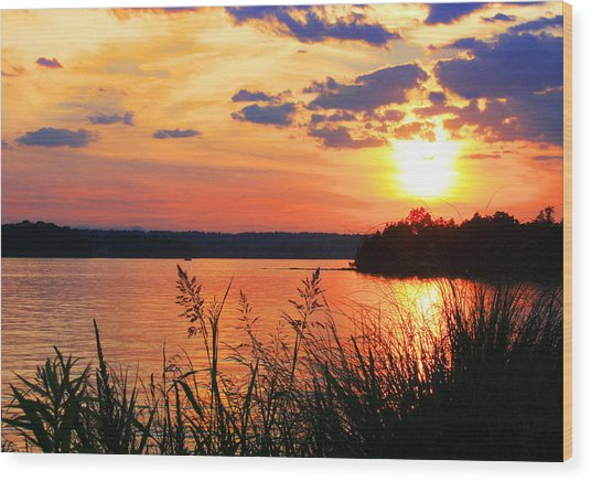 Tall Grass Sunset Smith Mountain Lake Wood Print