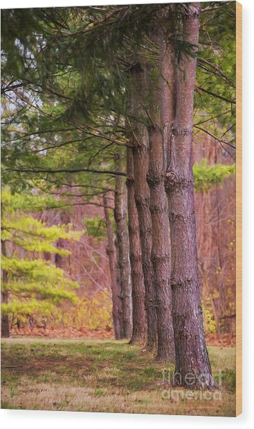 Tall Pines Standing Guard Wood Print