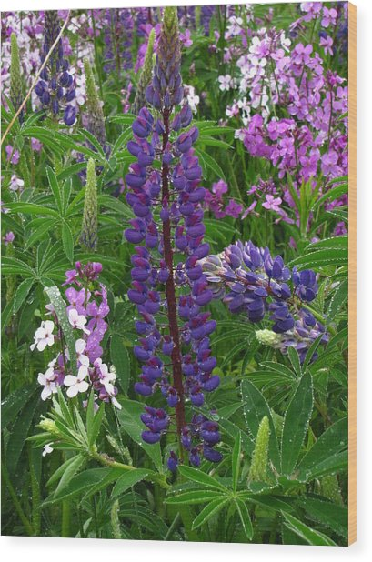 Tall Purple Luppin Wood Print by Melissa Parks