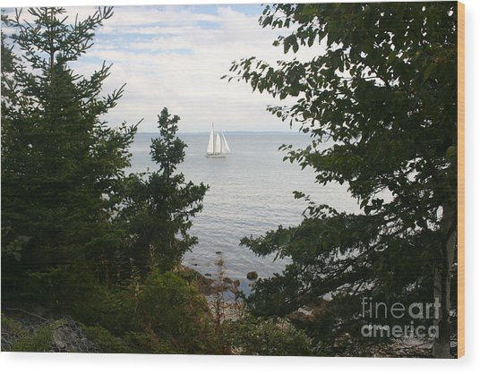 Tall Ship Wood Print by Dennis Curry