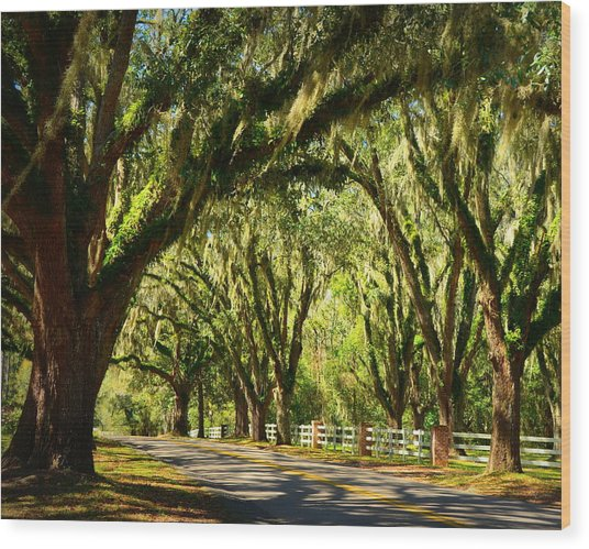 Tallahassee Canopy Road Wood Print