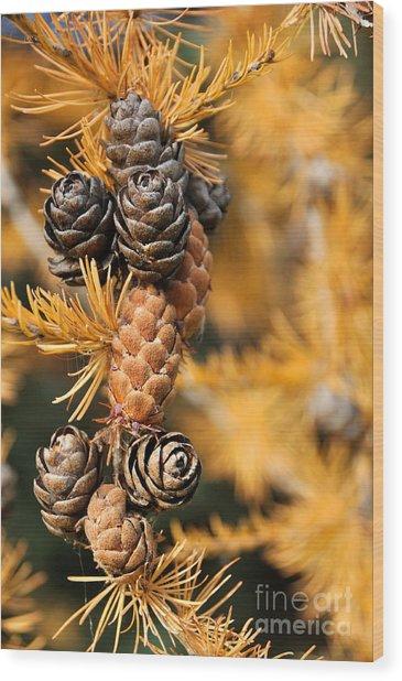 Tamarack Larch Tree In The Fall  Wood Print