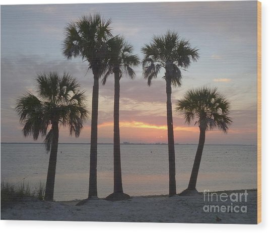 Tampa Bay Sunset Wood Print