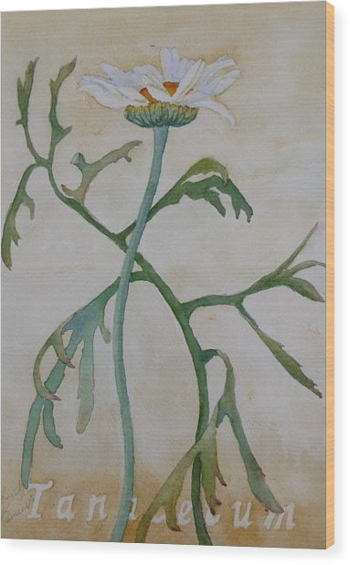 Wood Print featuring the painting Tanacetum by Ruth Kamenev
