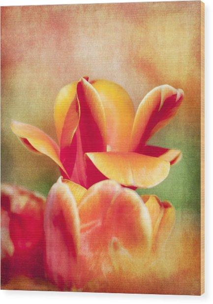 Tangerine Tulip Sorbet Wood Print