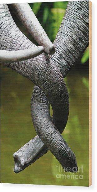 Tangled Trunks Wood Print
