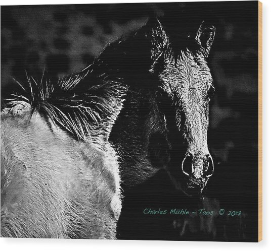 Taos Pony In B-w Wood Print