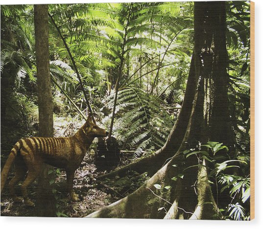 Tasmanian Wolf In Forest Wood Print by Christian Darkin