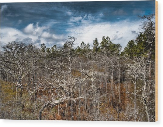 Tate's Hell State Forest Wood Print by Rich Leighton