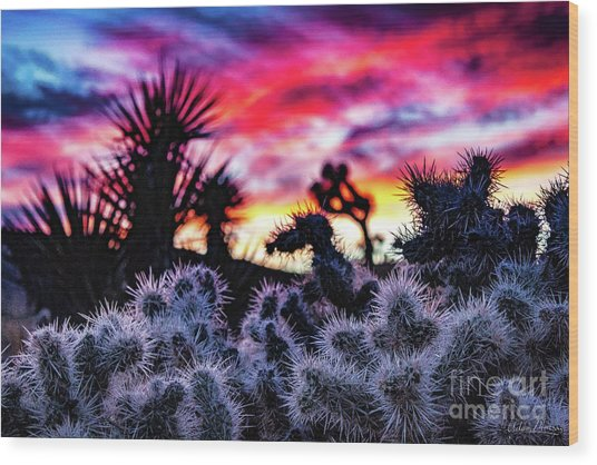 Teddy Bear Cholla Wood Print