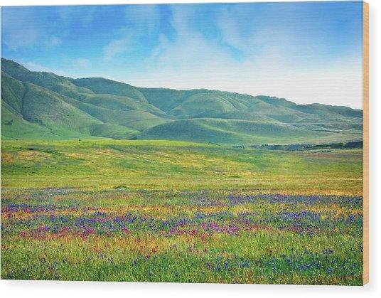 Tejon Ranch Wildflowers Wood Print