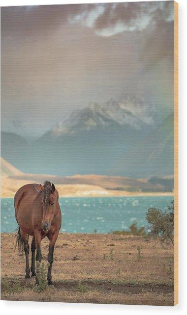 Tekapo Horse Wood Print