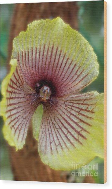 Telipogon Orchid Macro Wood Print
