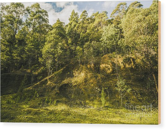 Temperate Rainforest Scene Wood Print