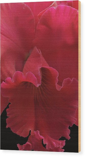 Tender Orchid Wood Print