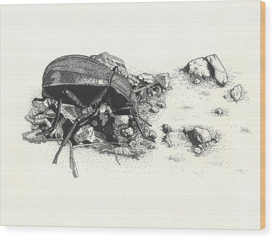 Darkling Beetle Wood Print