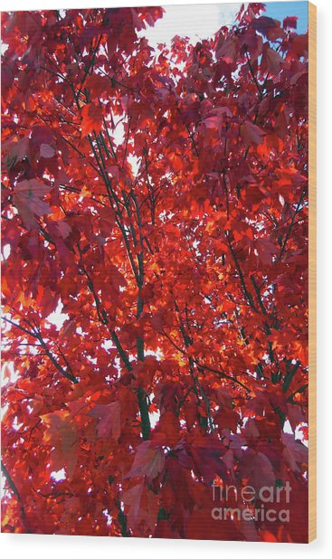 Tennessee Trees 3 Wood Print