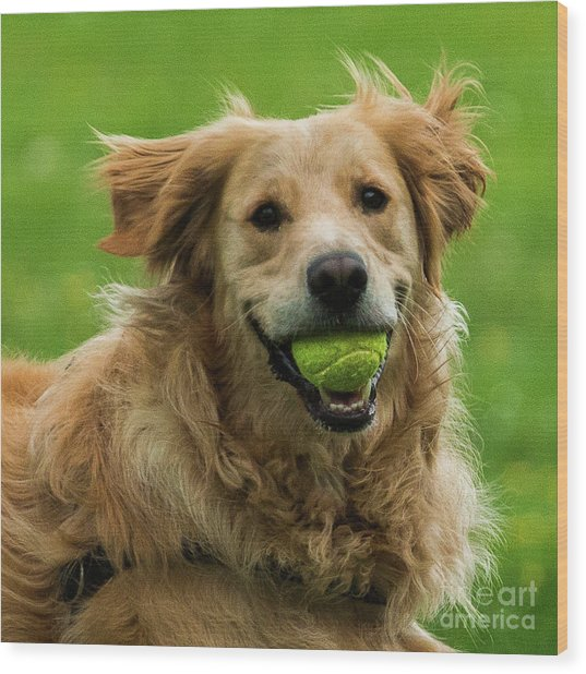 Tennis Is On ..wanna Play? Wood Print