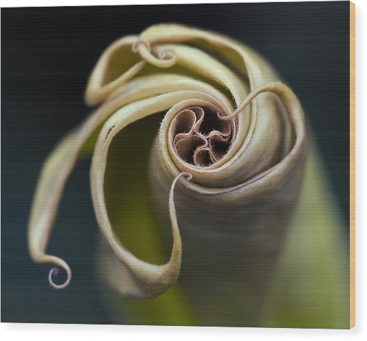 Tentacles Wood Print by Margaret Barry