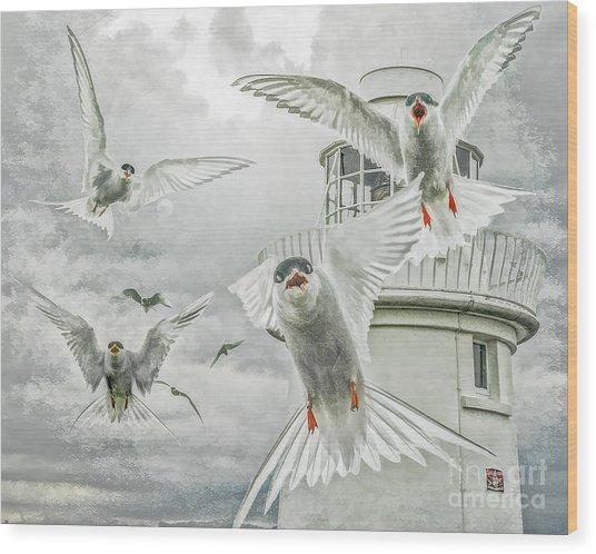 Tern Attack Wood Print