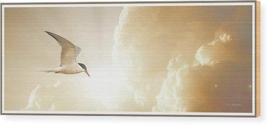 Tern In Flight, Spiritual Light Of Dusk Wood Print