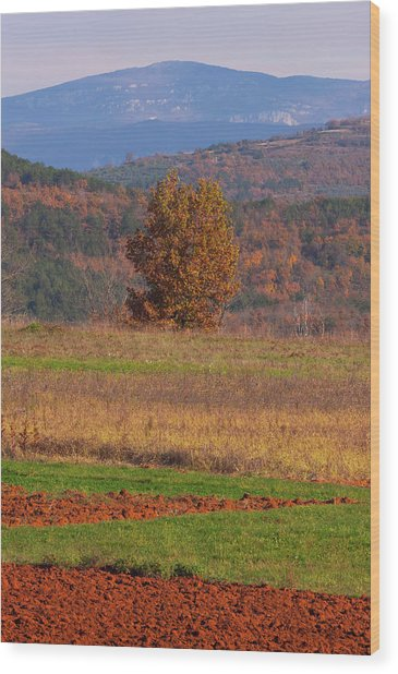 Terra Istria Wood Print