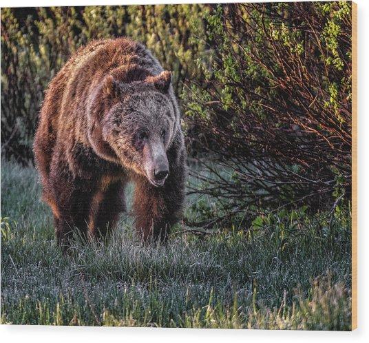 Teton Grizzly Wood Print