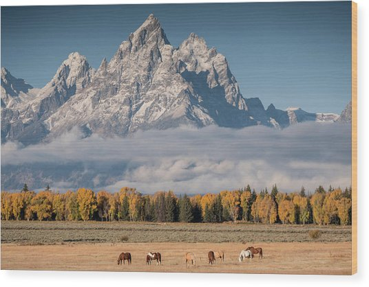 Wood Print featuring the photograph Teton Horses by Wesley Aston