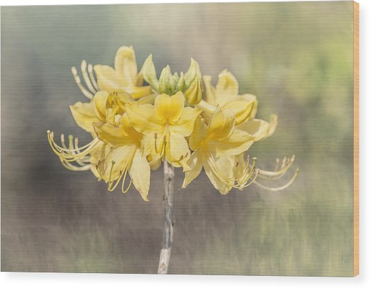 Texas Azalea -textured Wood Print