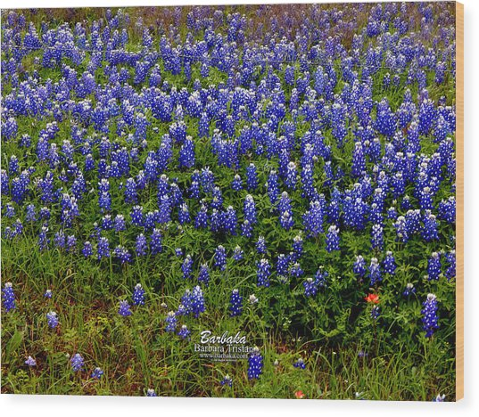 Texas Bluebonnets #0484 Wood Print