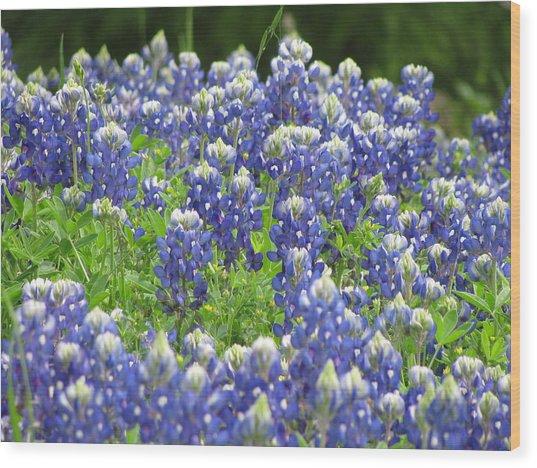 Texas Bluebonnets Austin Texas Wood Print