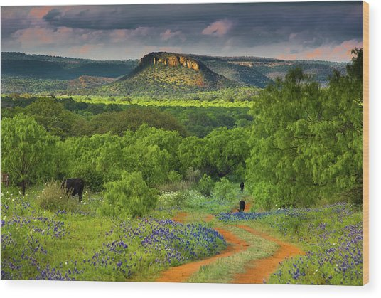 Texas Hill Country Ranch Road Wood Print