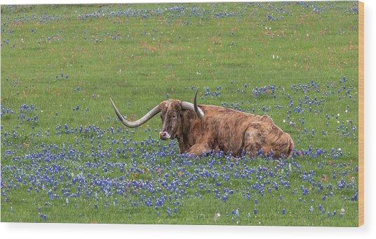 Texas Longhorn And Bluebonnets Wood Print