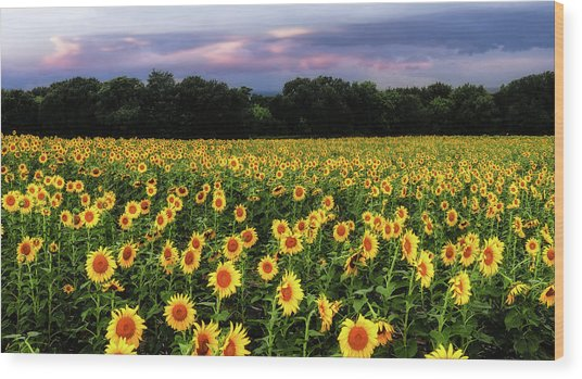 Texas Sunflowers Wood Print