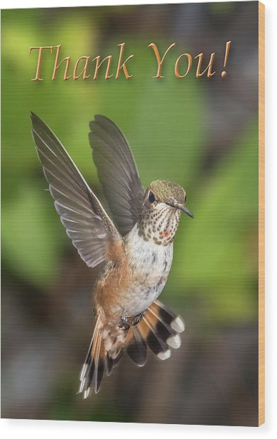 Thank You - Female Rufous Hummingbird  Wood Print