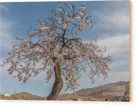 The Almond Tree Wood Print
