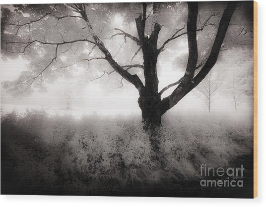 The Ancient Tree Wood Print