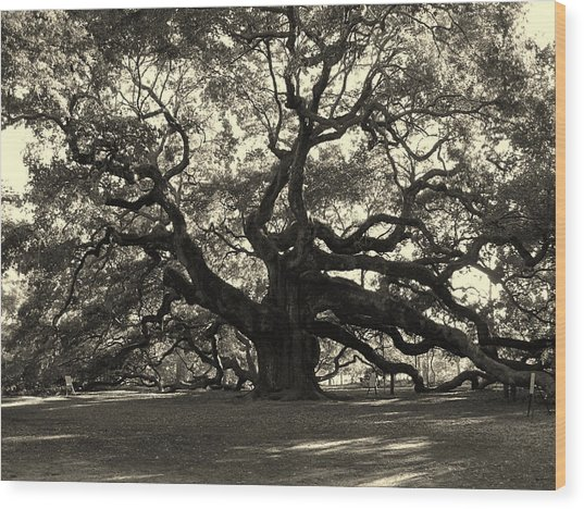 The Angel Oak Wood Print