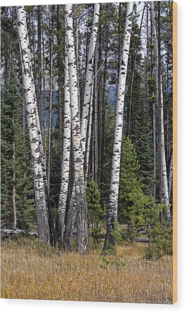 The Aspens Wood Print