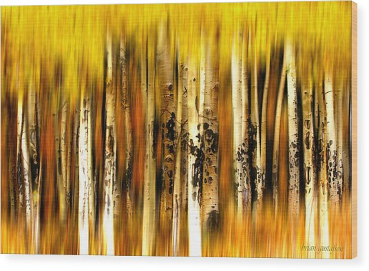 The Aspens Of Kenosha Pass Wood Print