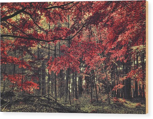 The Autumn Colors Wood Print