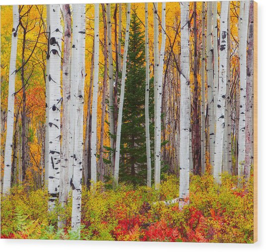 The Autumn Forest Wood Print