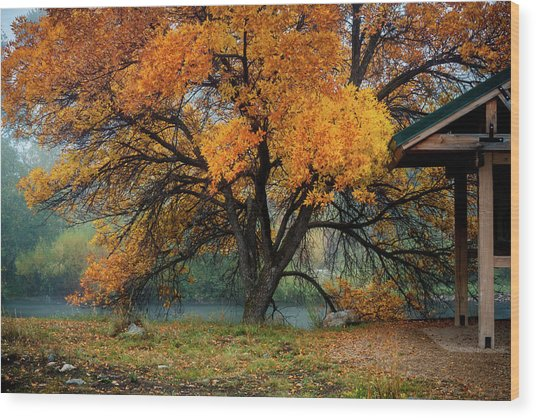 The Autumn Tree Wood Print