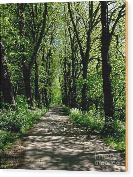 The Avenue Of Limes At Mill Park 3 Wood Print