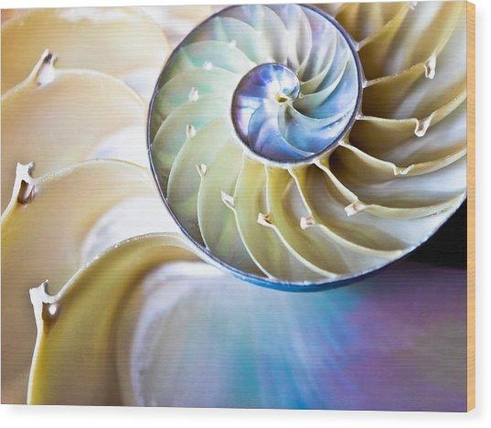 The Beauty Of Nautilus Wood Print