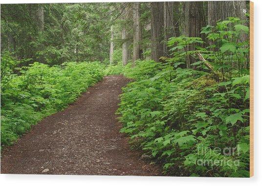 The Berg Lake Trail Wood Print