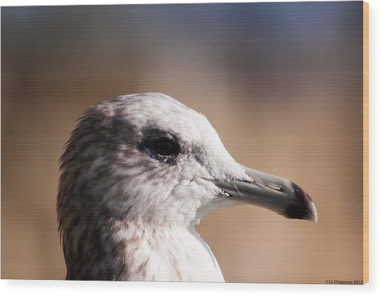 The Best Side Of The Gull Wood Print