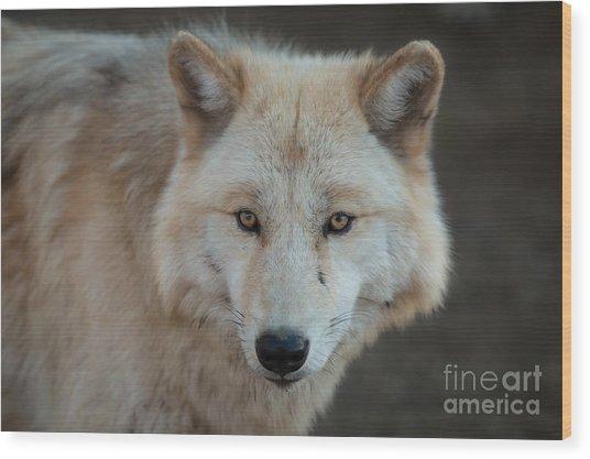 The Big Beautiful Wolf Wood Print