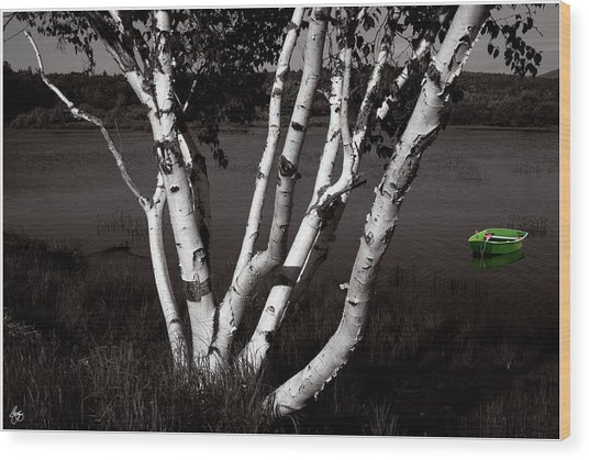 The Birch And The Green Dingy Wood Print