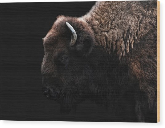 The Bison Wood Print